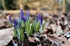 Hallo Frühling