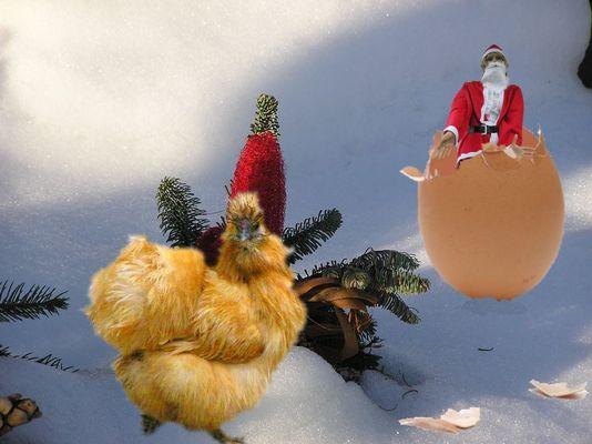 Hallo ! Hast Du mein Ei gesehen ?