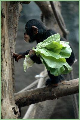 Hallo ... hier ist der Gemüsemann !!!