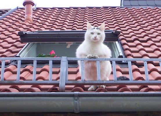 Hallo, jemand da unten?