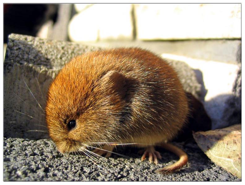 Hallo kleine Maus !