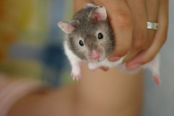 Hallo ... kleiner Hamster.