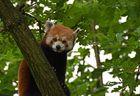 Hallo, kleiner Panda