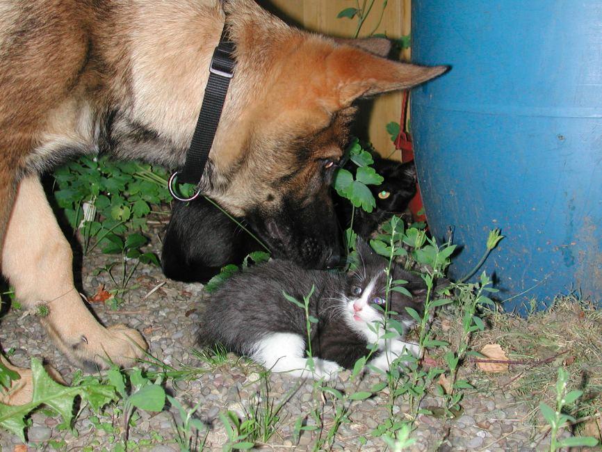 Hallo süsse Mieze, ich bin der liebe Wolf und habe dich zum Fressen gern!