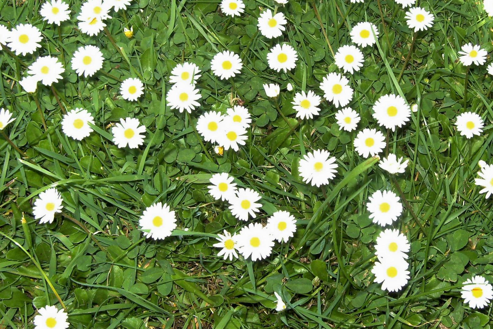 Hallo...Frühling