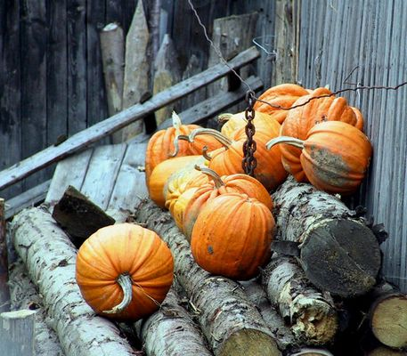 Halloween ?!?