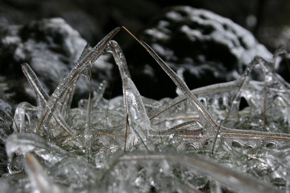 Halm im Eis