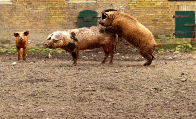 Halt endlich still, du Schwein!