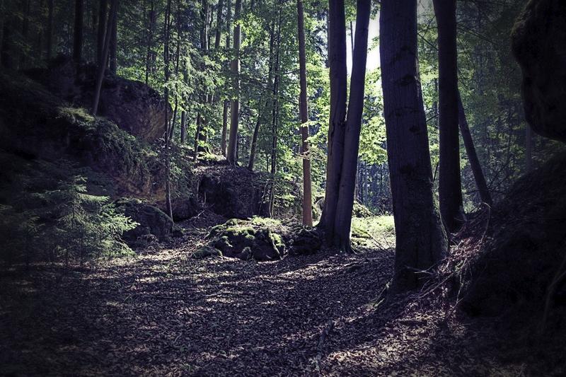 halt im Wald ;-)