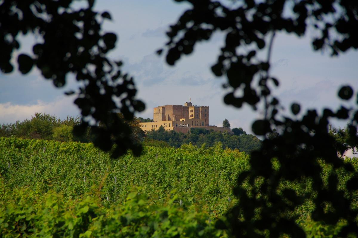 Hambacher Schloss aus dem Weinberg
