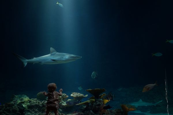 Hamburg, Aquarium