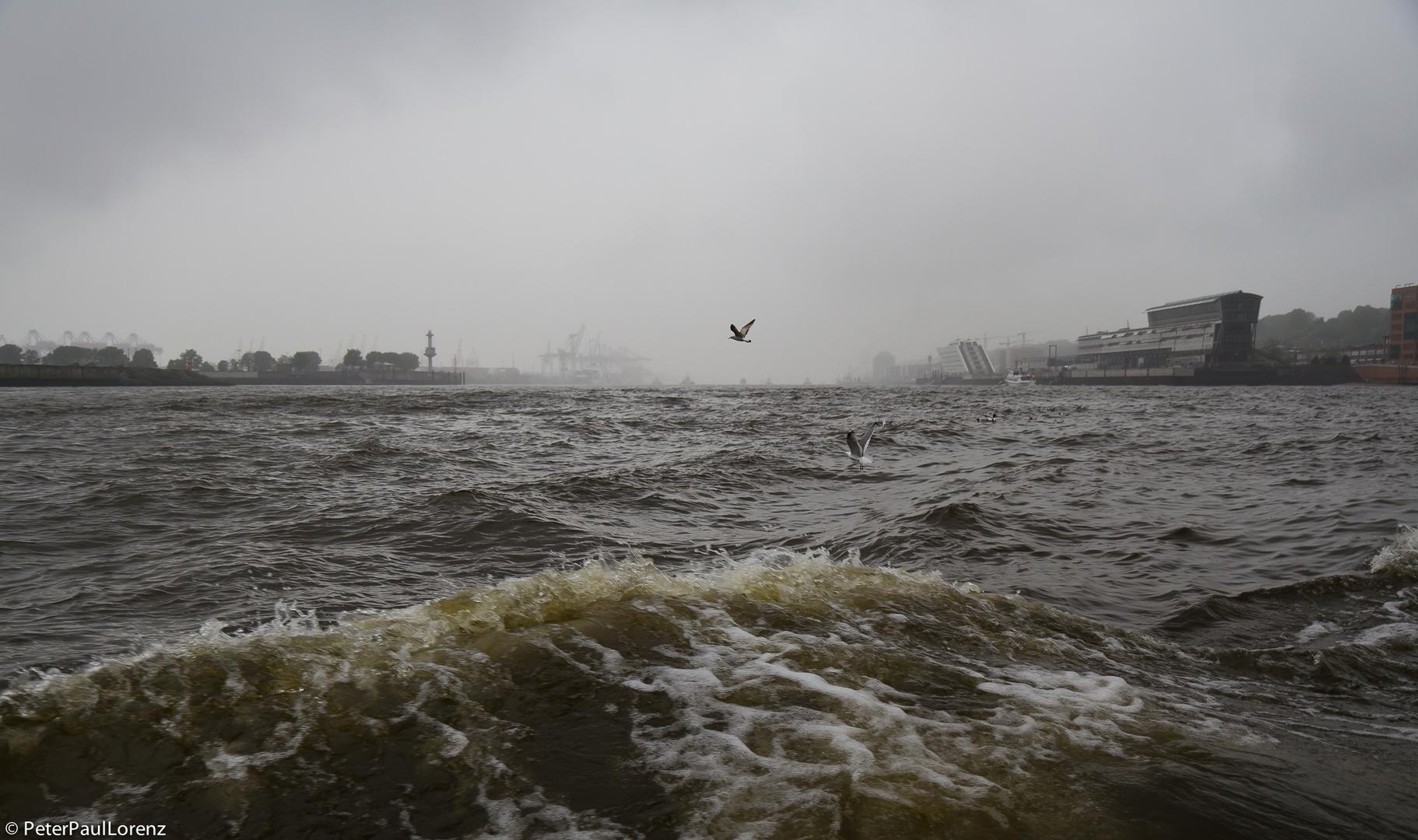 Hamburg. Elbe. Möwen