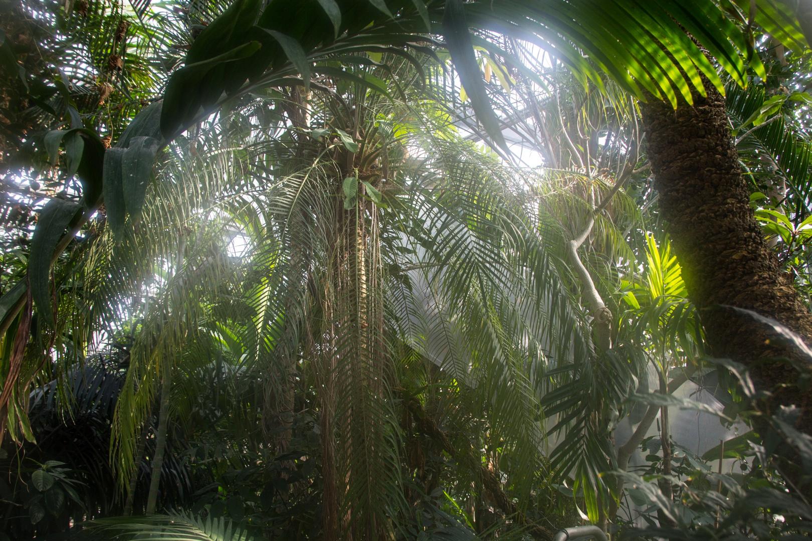 Hamburger Dschungel