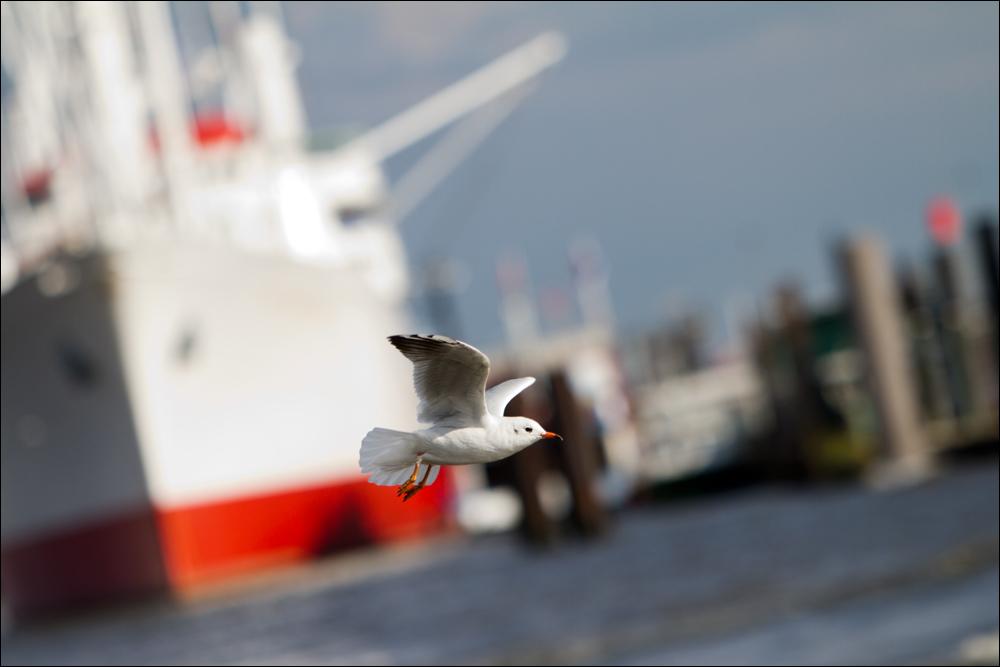 Hamburger Hafen............Rundflug
