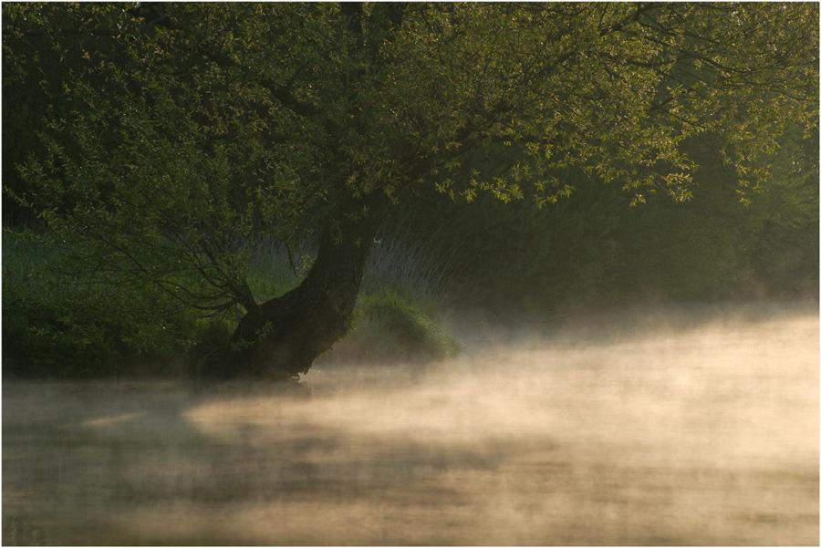 Hamme im Morgennebel