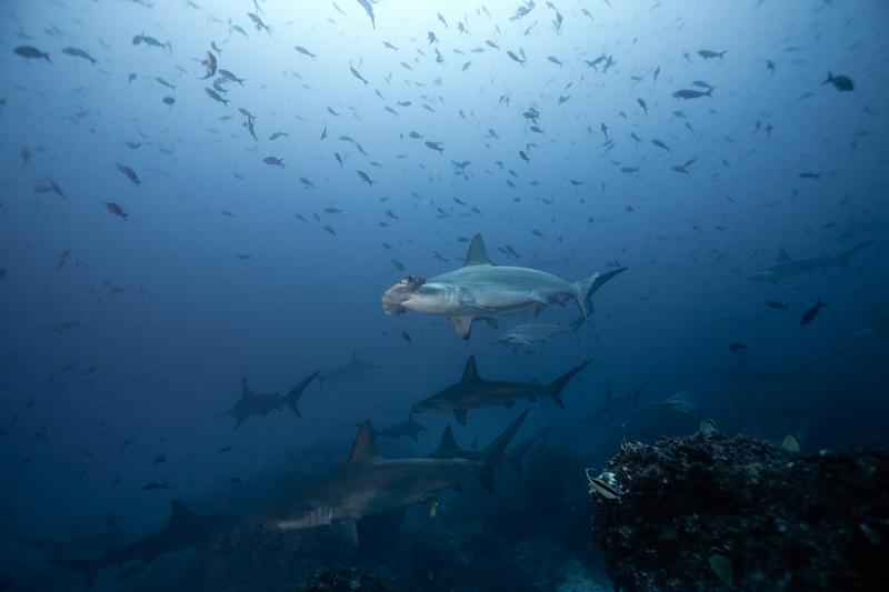 Hammer die Haie....hier