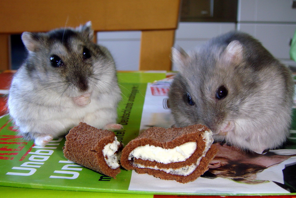 Hamster auf frischer Tat erwischt