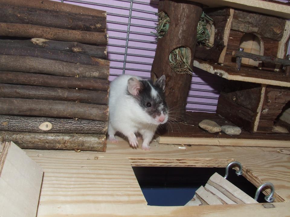 Hamster Bounty