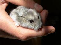 hamster ohne namen