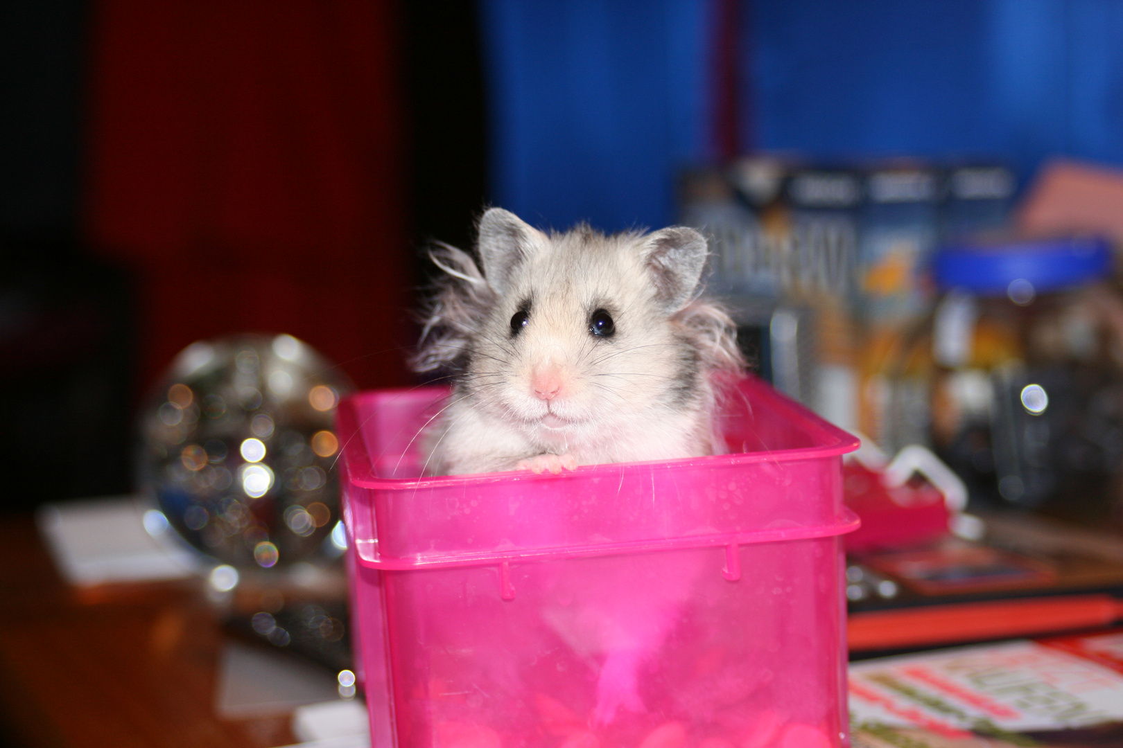 Hamster To Go