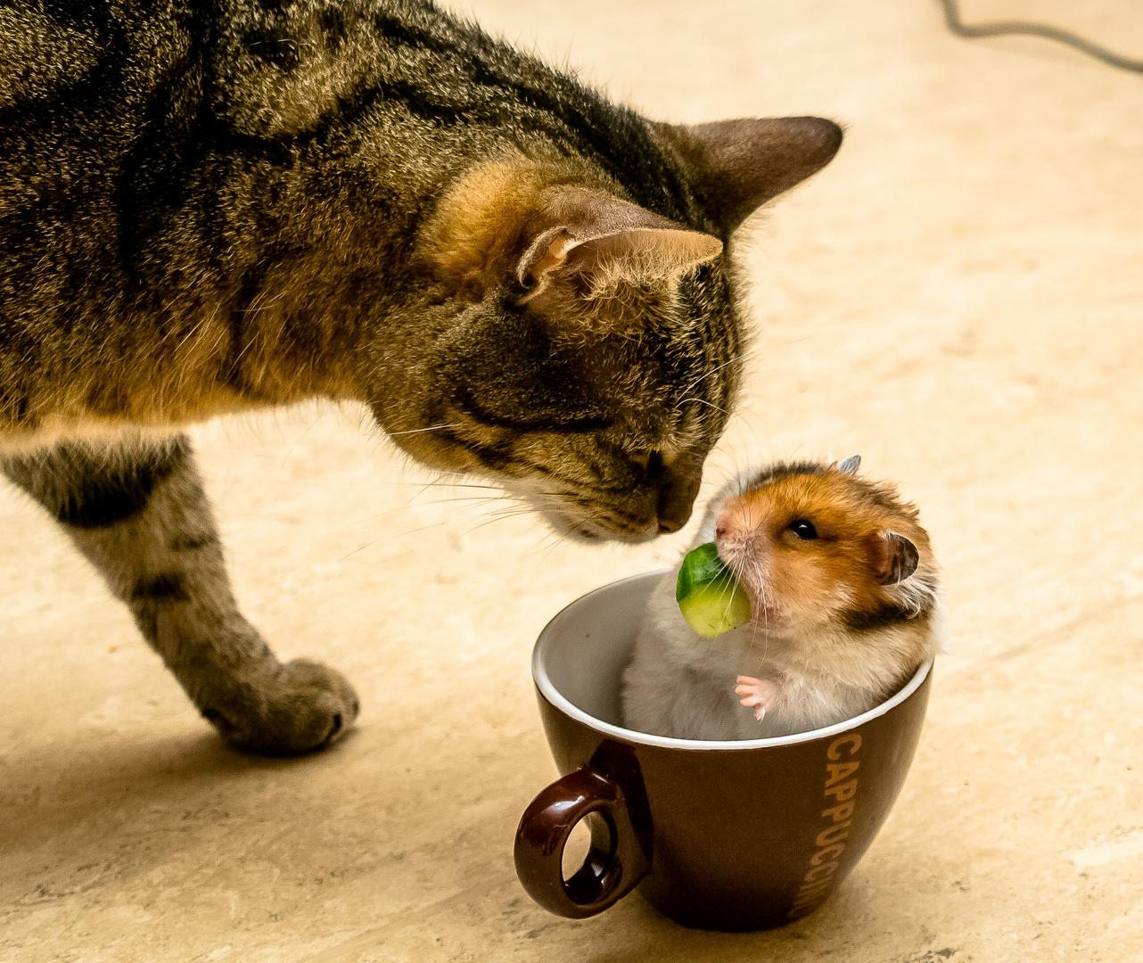Hamster und Katze