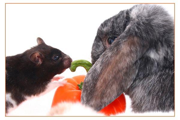 Hamster vs. Hase