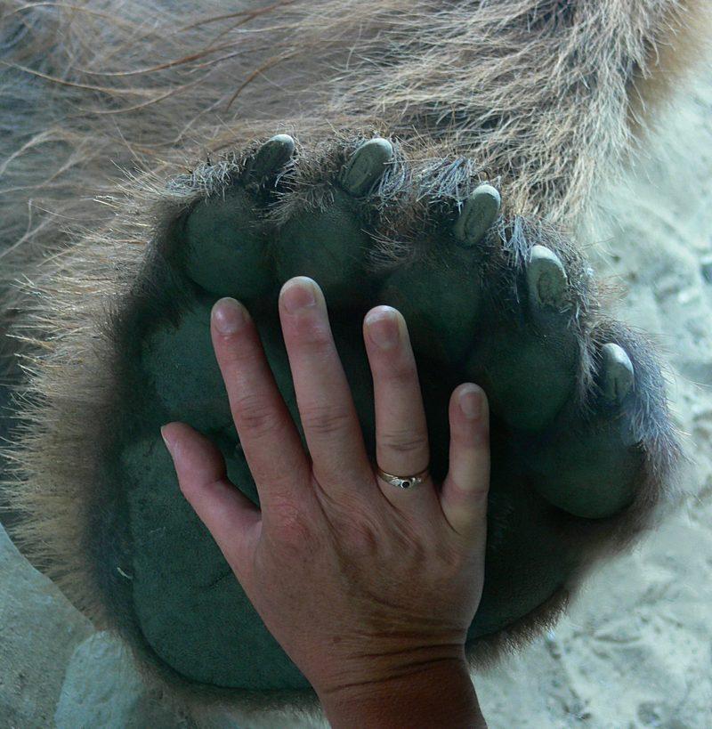 """Hand an """"Hand"""" ....."""