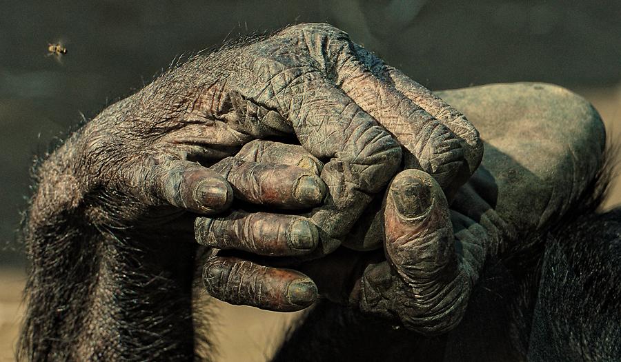 HAND U. FUSS UND................