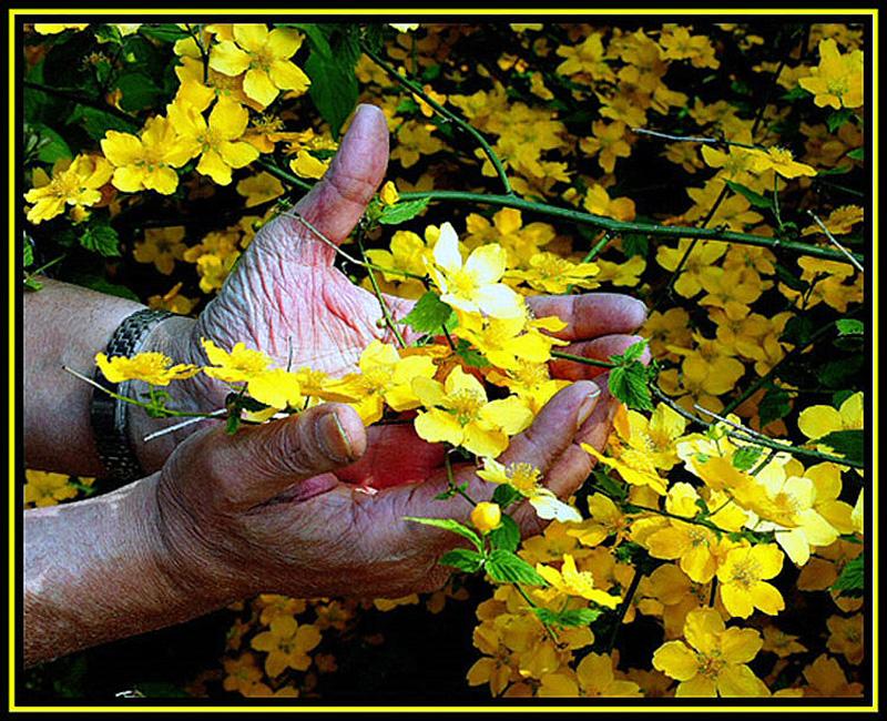 handsfull of flowers