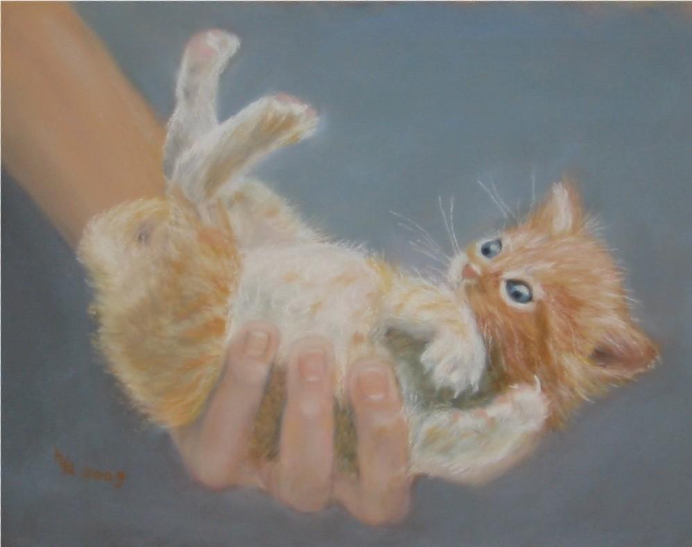 Handvoll Katze