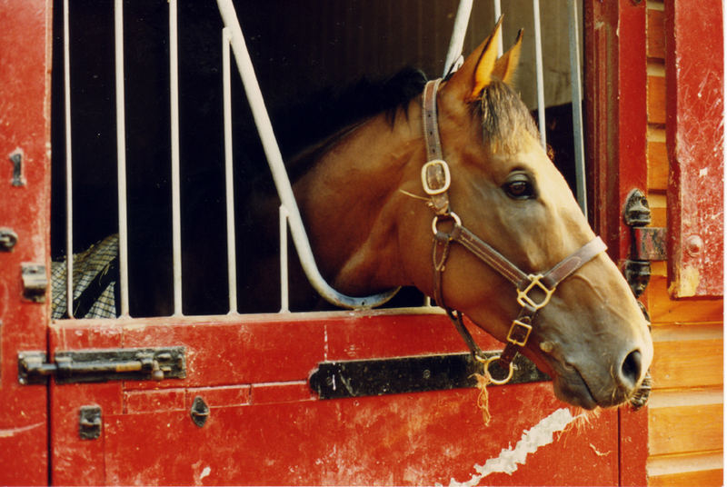 hannas horse