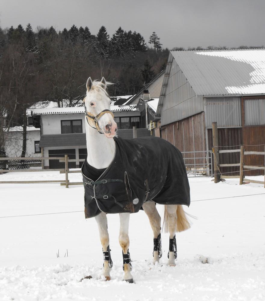 Hannibal im Schnee