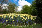 Hannover-Herrenhausen ... die Frühlingsblumen