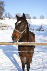 Hansi darf in den Schnee