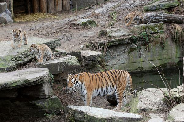 Hanya und ihre Sprößlinge