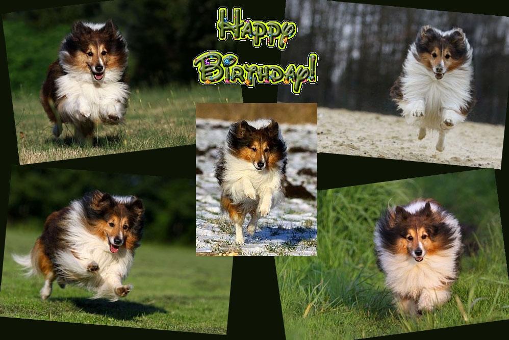 Happy Birthday, Happy ;-))