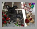 happy birthday ilona