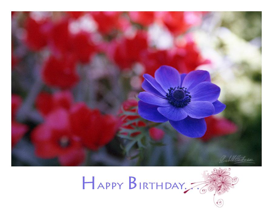 Happy Birthday Julius ;)