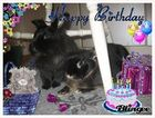 happy birthday udo