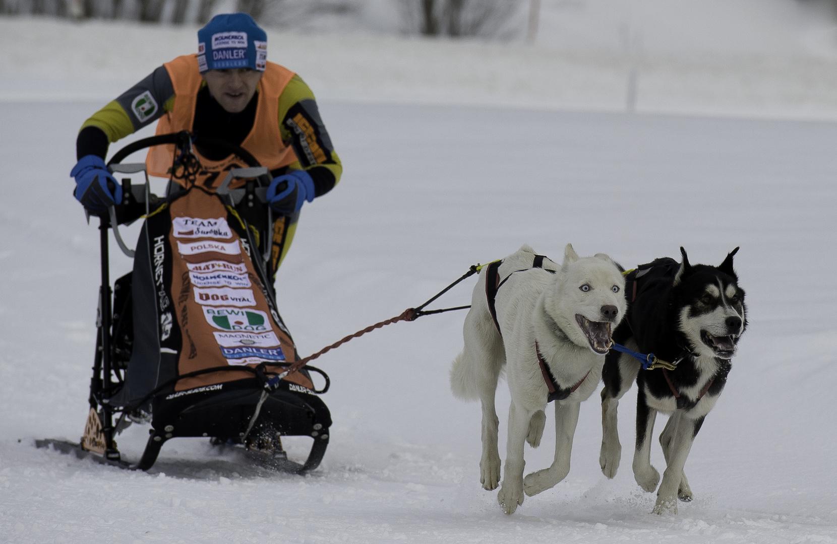 Happy Dog, Bewi Dog, Hot Dog,.........