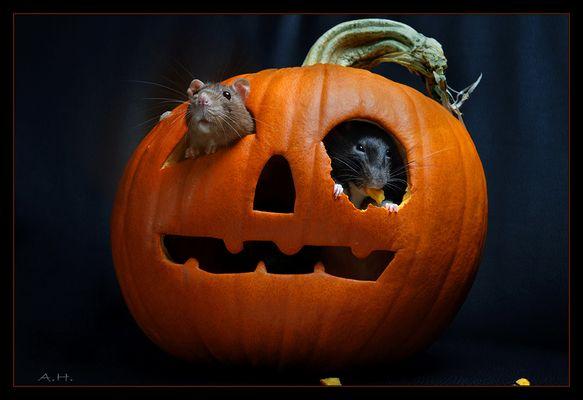 *Happy-Halloween*
