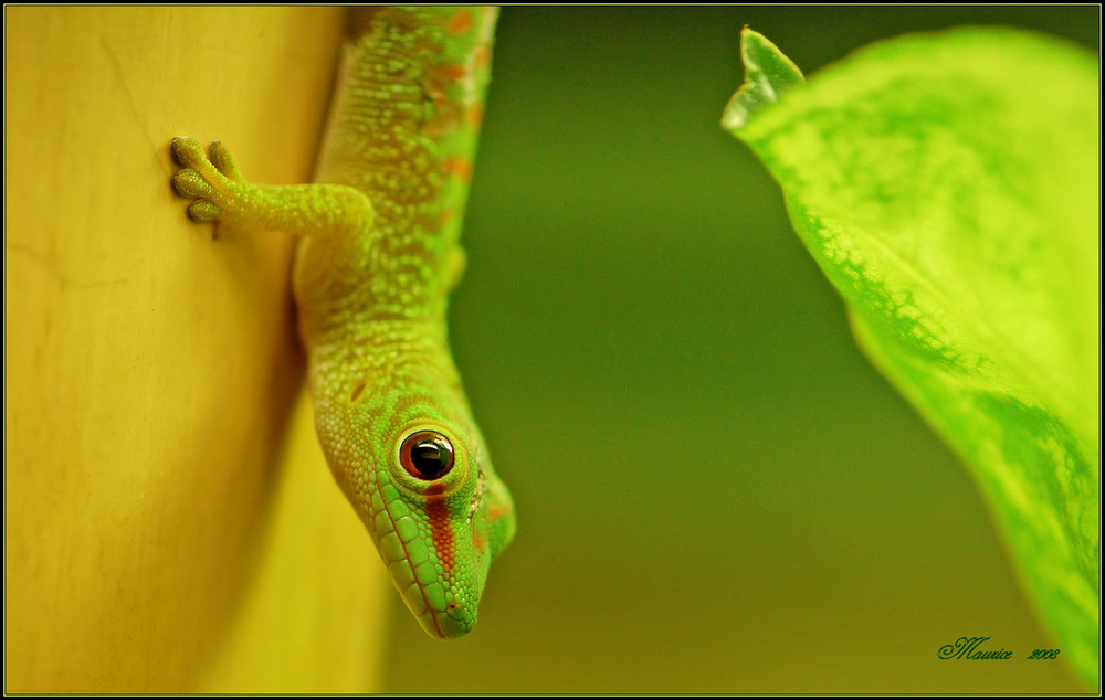 happy in green...