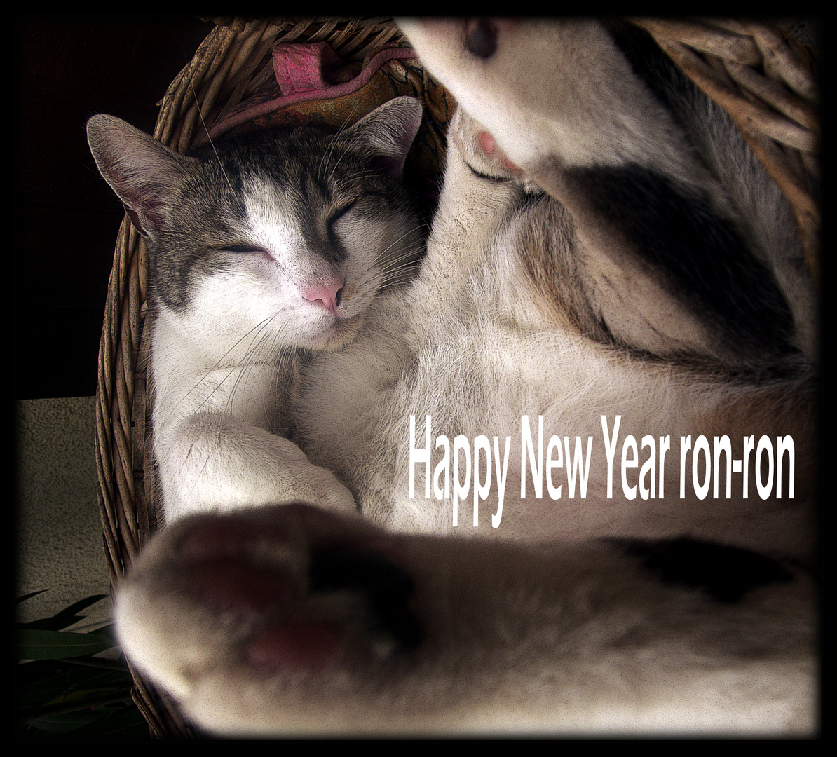 Happy New Year ron-ron