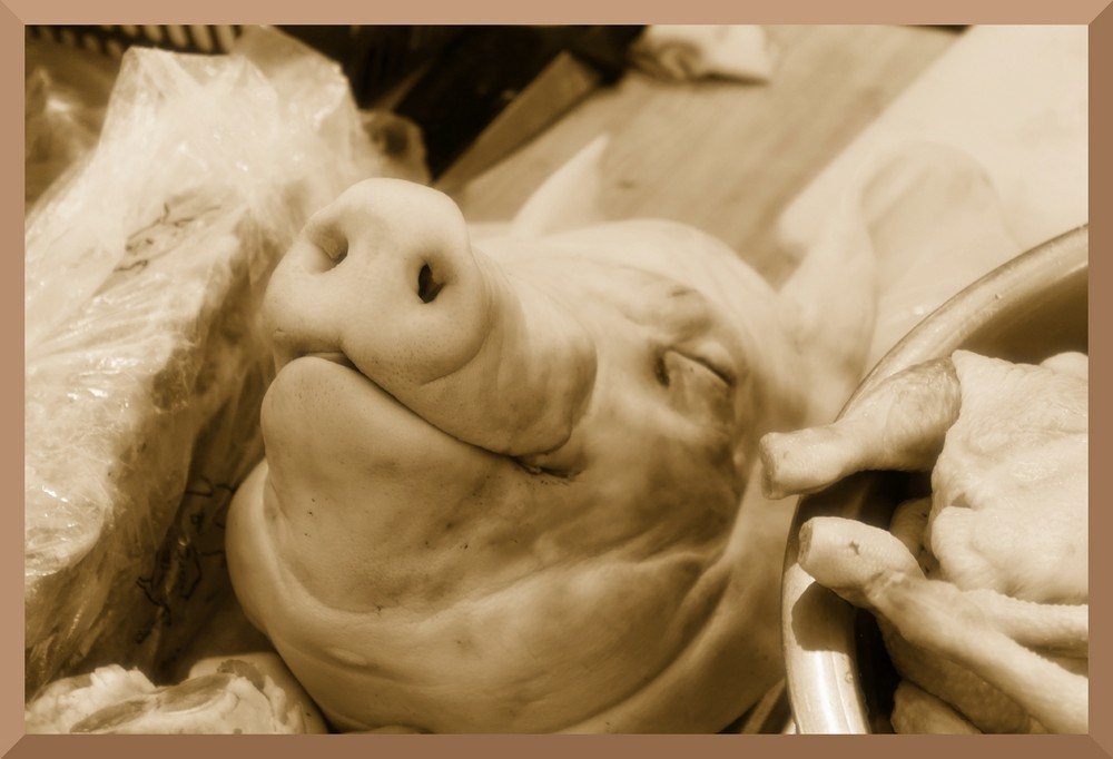 Happy swine??