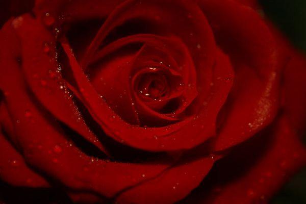 Happy Valentine II