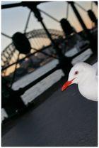 Harbour Bridge - 3