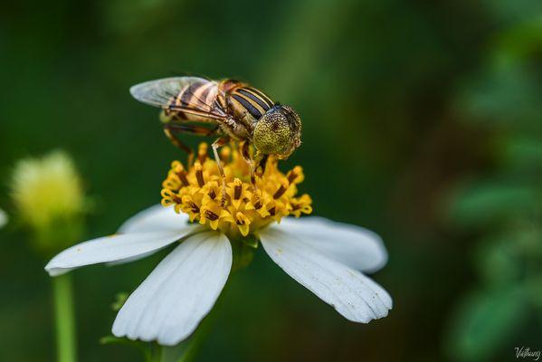 Hard work bee