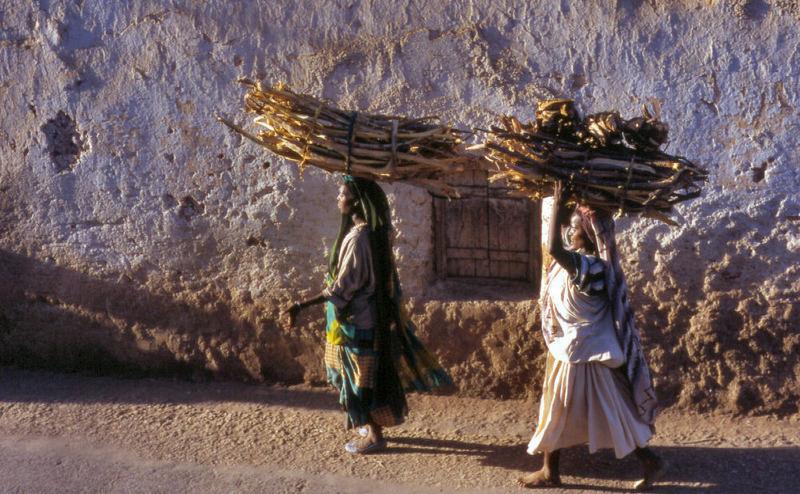 Hard Work in Harar