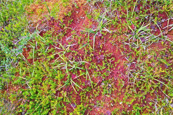 Hardanggervida Ground Plants.