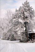 Hardinger Winterbilder: Große Weihnachtsvorstellung 1